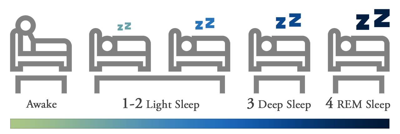 4 Stages of Sleep - REM